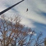 Boulder Tree Service: The Technical Crane Removal