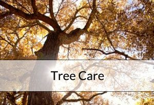 br-tree-care
