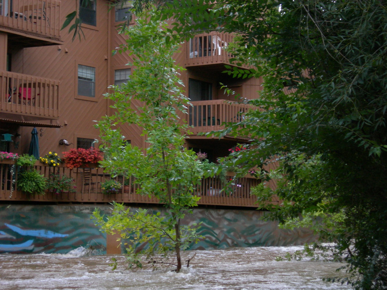 colorado 100 year flood  flooding effects on trees
