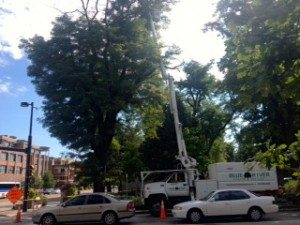 Highly skilled arborist removing unsafe deadwood just in time for the Hometown Fair