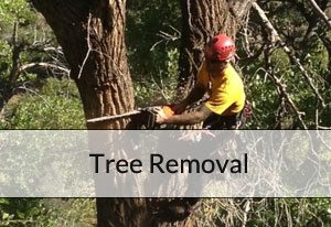 br-tree-removal
