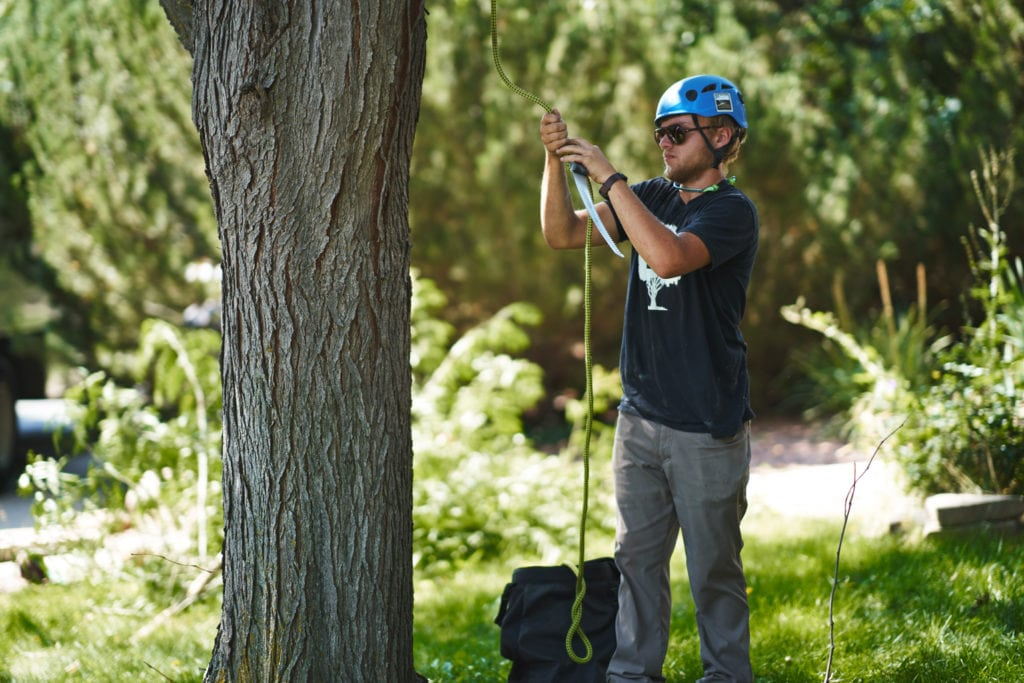 Erie Arborist for your Colorado Property