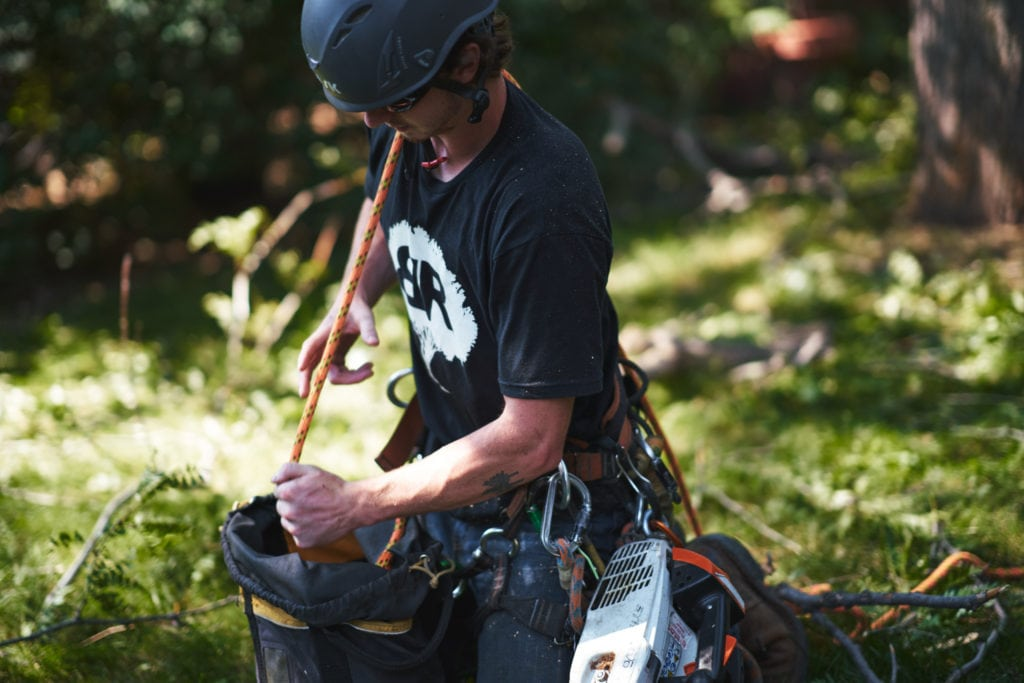 Tree Care - Boulder & Longmont, CO