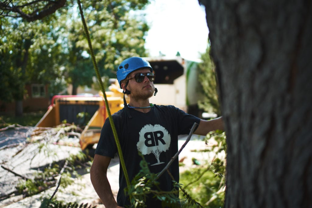 Tree Service - Boulder & Longmont, CO