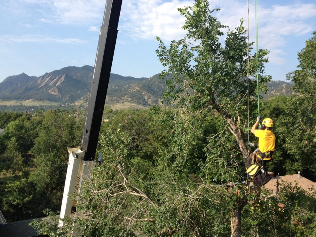Boulder, CO emergency tree service