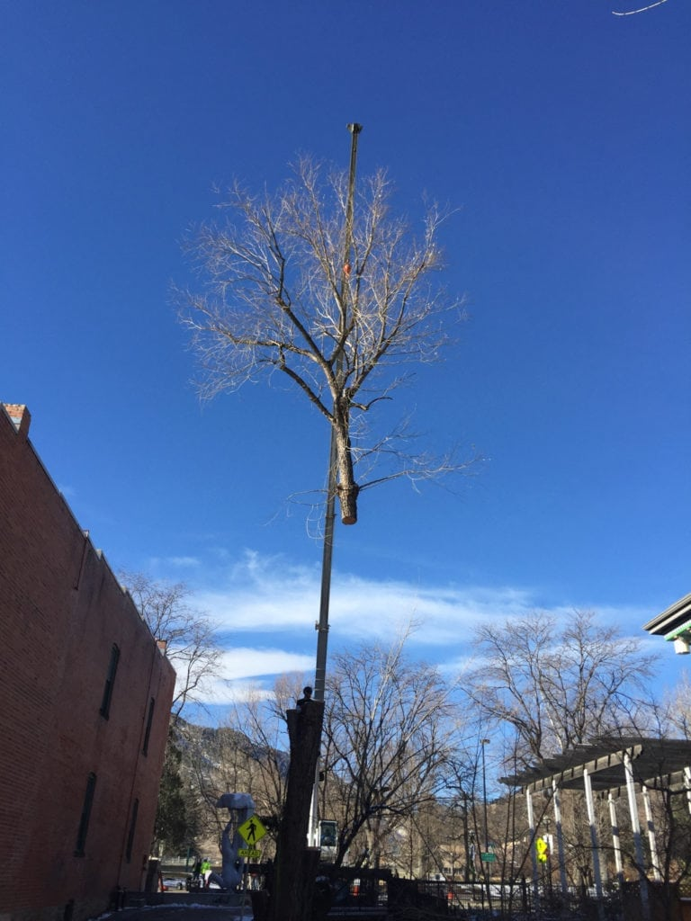 Broomfield, Colorado Tree Removal Company