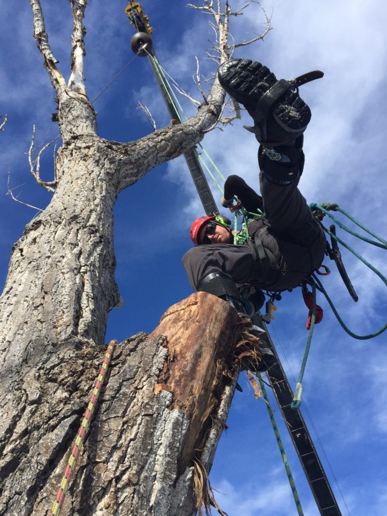 Boulder, Colorado Tree Removal Team