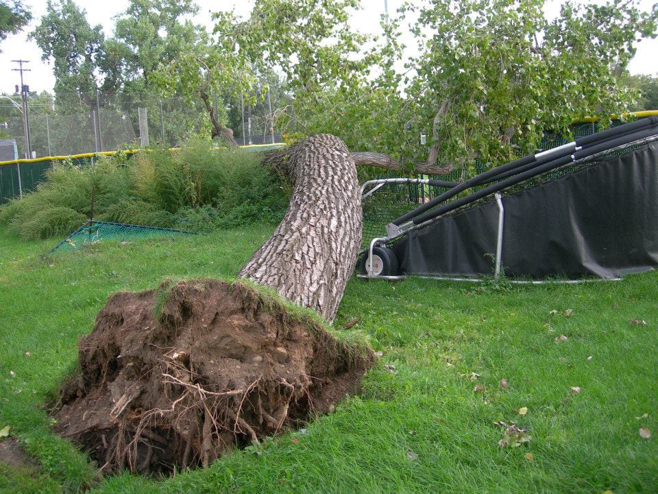 Emergency tree #2_