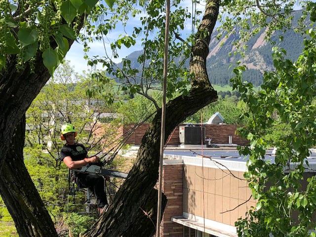 Boulder, Colorado Tree Trimming Team