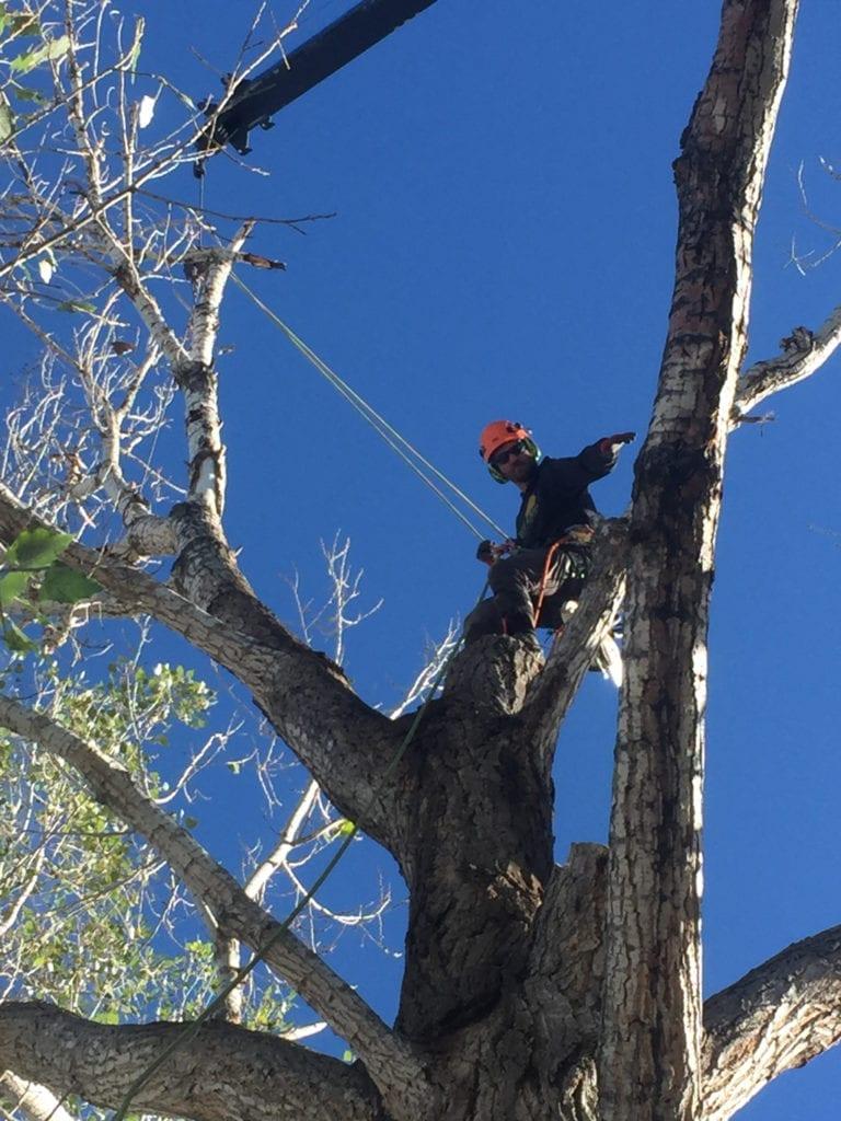 Mark Wall Tree Removal_