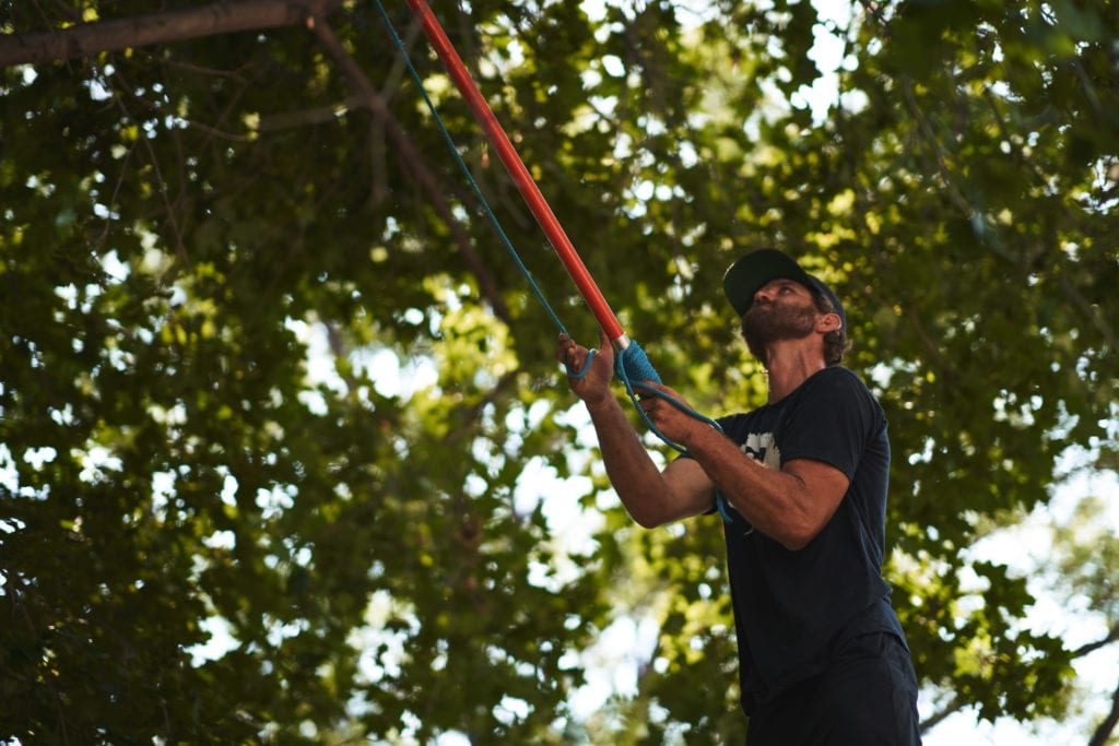 Tree Care Company in Longmont, Colorado