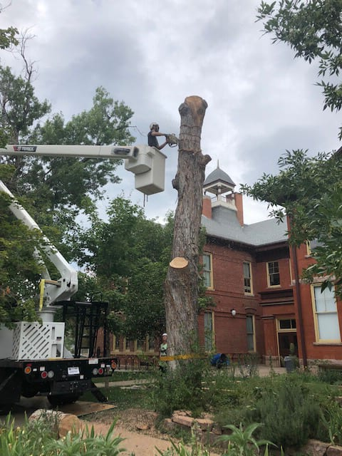 Tree removal_