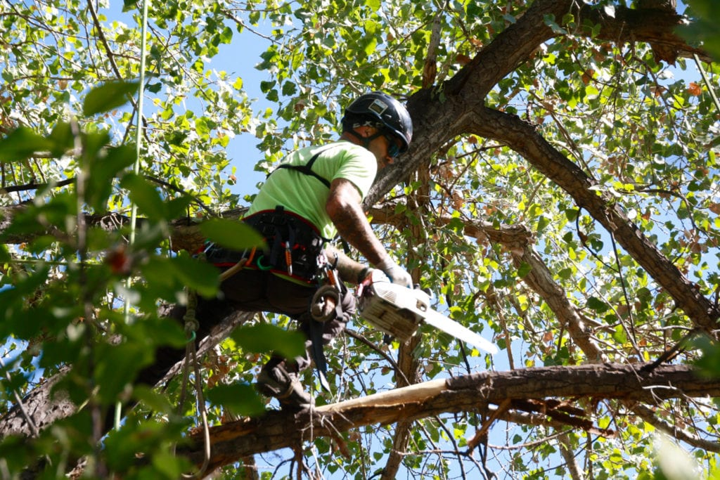 Boulder, Colorado Tree Trimming Services