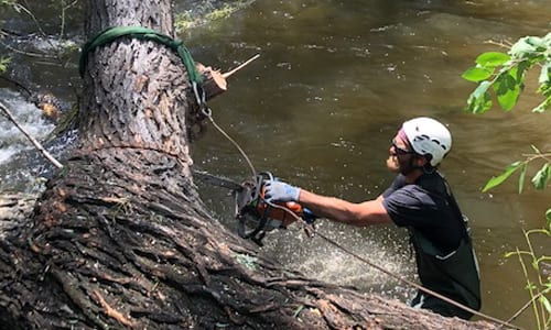Emergency Tree Service in Boulder, Colorado