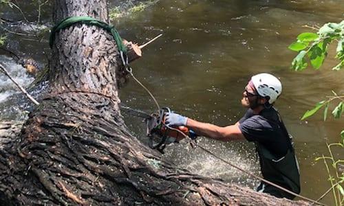 Emergency Tree Service in Boulder, Colorado