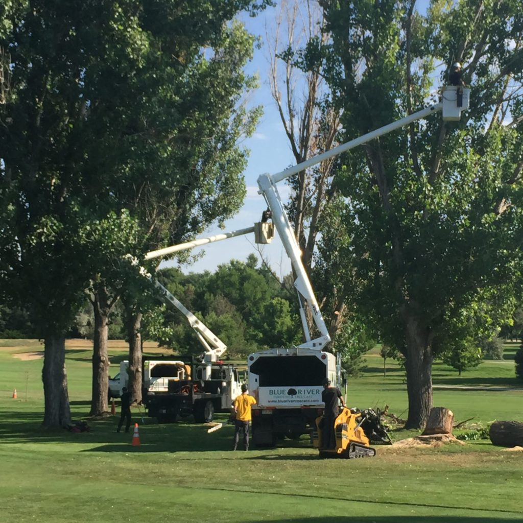 Tree Care Company in Louisville, Colorado