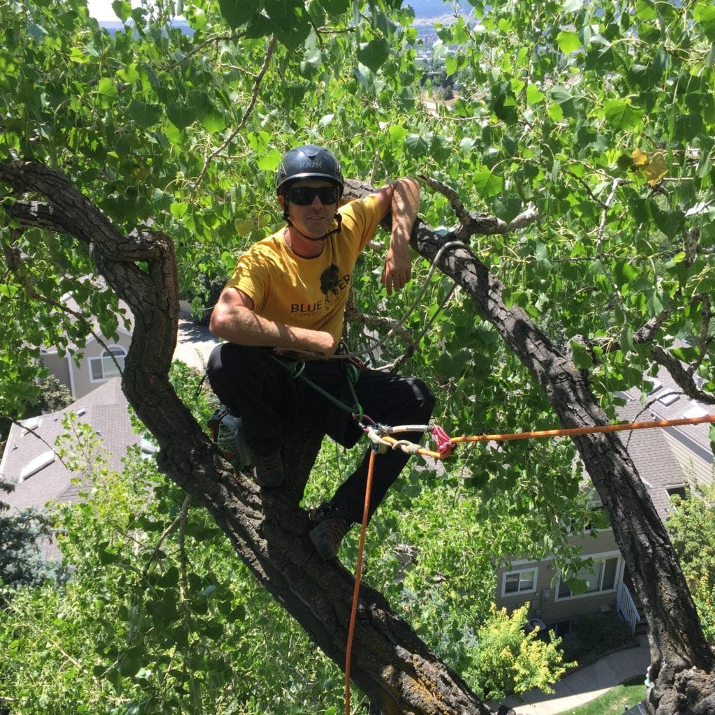 Tree Care Company in Boulder, Colorado
