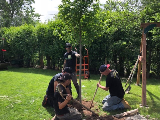 Tree Care Company in Boulder, CO