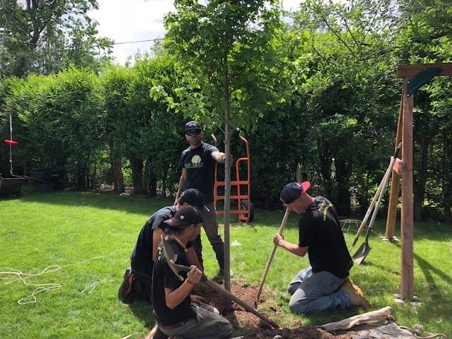 tree planting gallery