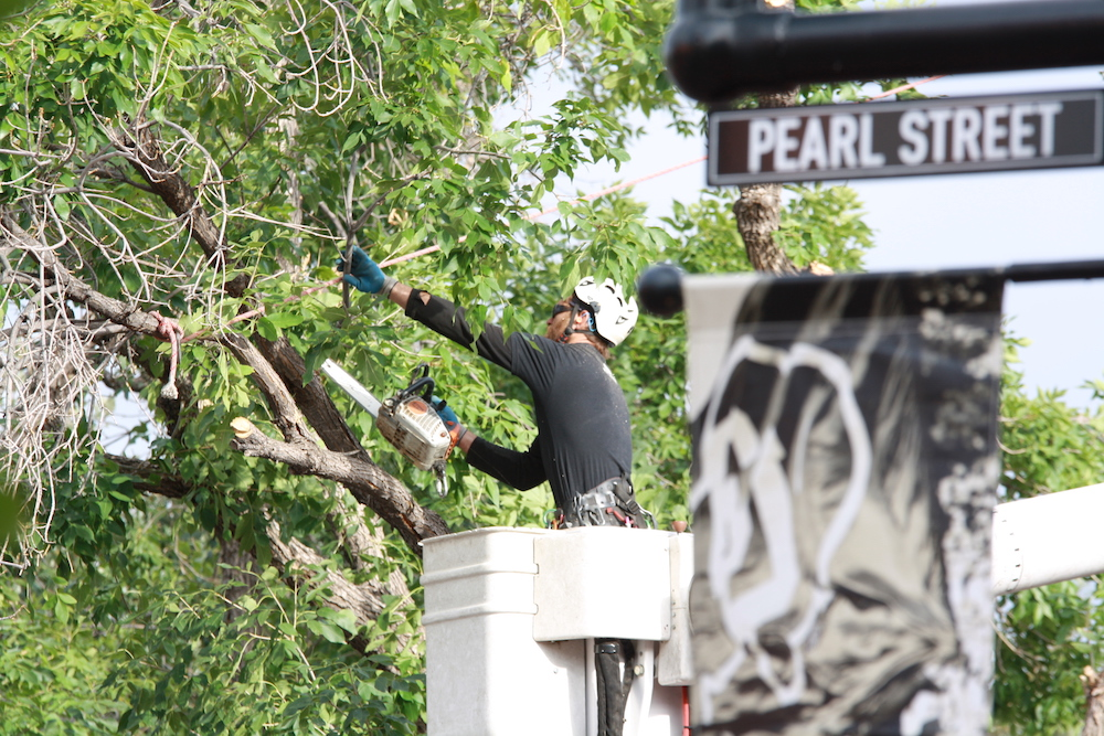 Experienced Boulder Arborist in Boulder County, Colorado