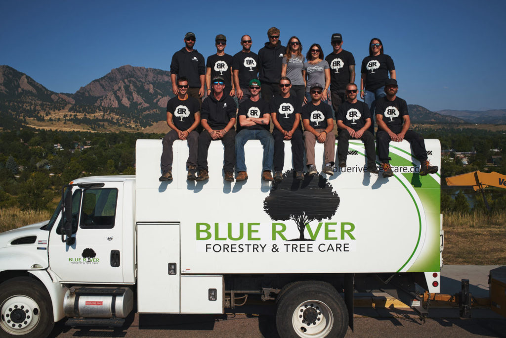 Erie, Colorado Tree Service Team