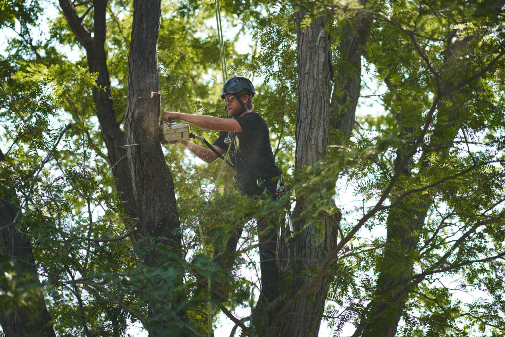 Tree Trimming Services in Broomfield, Colorado