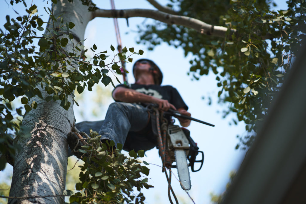 Tree Trimming Team in Erie, Colorado
