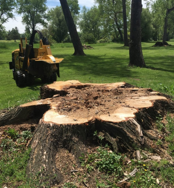 Erie, Colorado Stump Removal Services