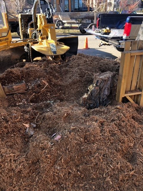 Stump Removal During Grinding in Boulder, CO