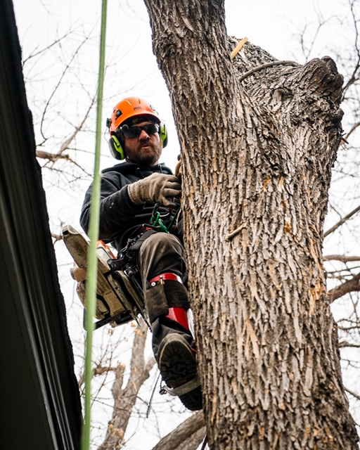 lafayette-tree-removal