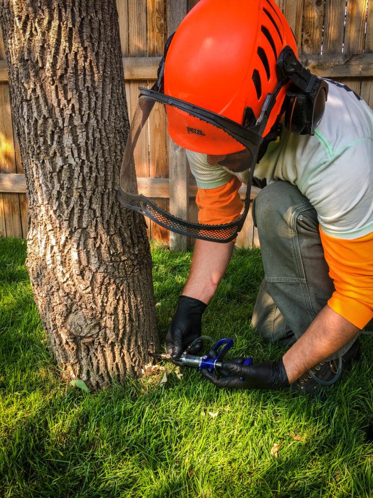 boulder-colorado-tree-care-services