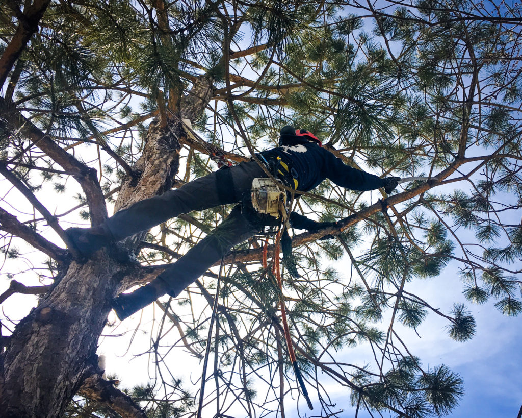 boulder-colorado-tree-removal