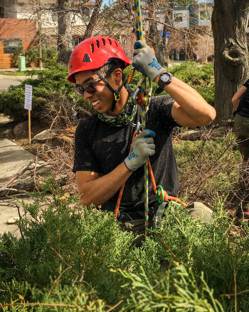 boulder-colorado-tree-services