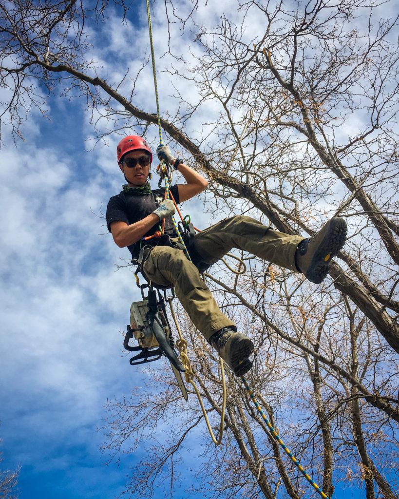 longmont-colorado-arborist