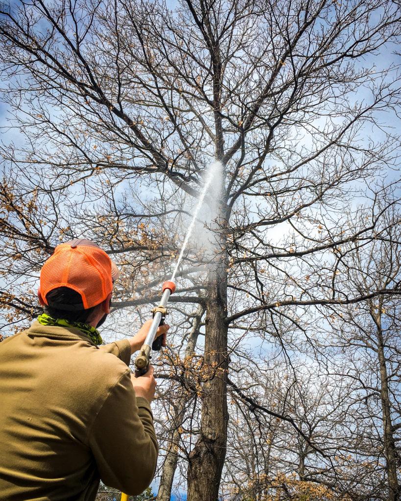 longmont-colorado-tree-care-services