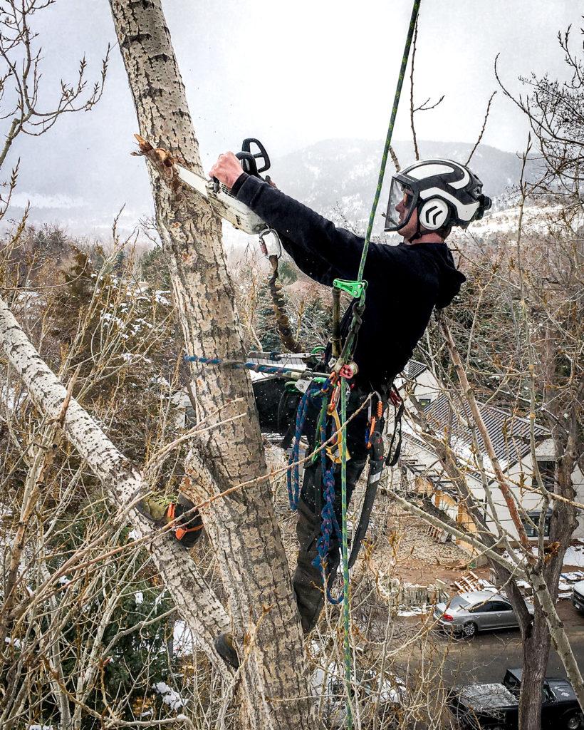 longmont-colorado-tree-removal